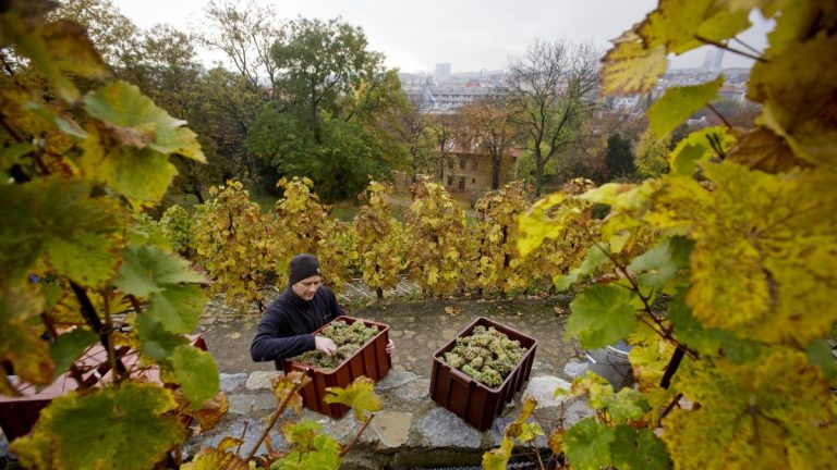 The Czech Republic is one Unknown as a wine nation – but the world's top