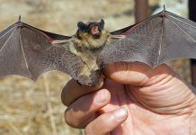 In the state Duma called populism the proposal to ban eat bats