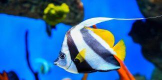 Moskvarium produced informative video materials on aquatics