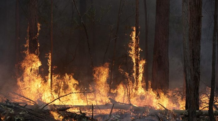 The fire occurred in the exclusion zone in Chernobyl